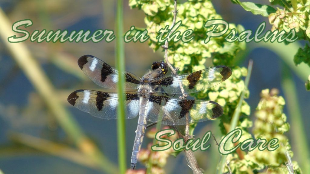summer in the Psalms Soul Care